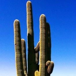 cactus2